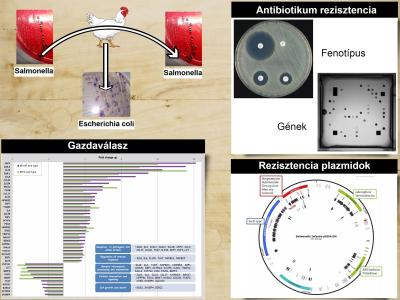 Principal research activities of the research group Enteric bacteriology and foodborne zoonoses